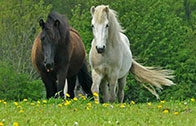 Pferd kaufen